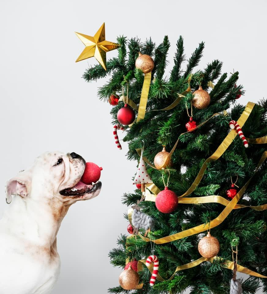 Christmas Tree with Dog