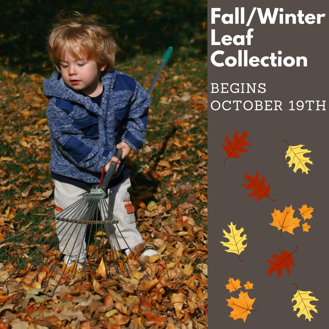 Fall_Winter Leaf Collection
